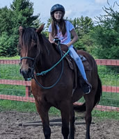 Sage is a Belgian Morgan cross mare and 16 years old