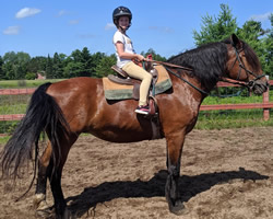 Tilly is a Belgian Morgan cross mare that is 17 hands tall and 20 years old.