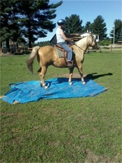 Lessons and Day Camps teach horse and ride to use do more than go in circles.